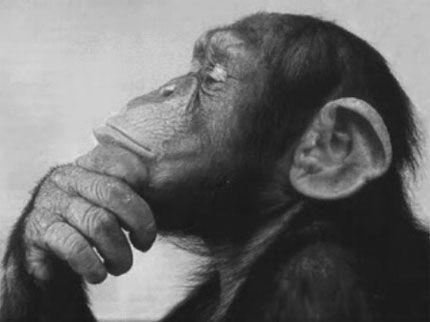 Городянин та Мавпа - Християнська Притча