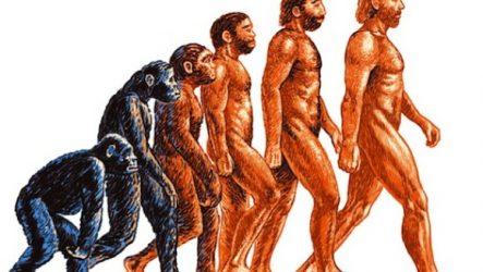 Еволюційна теорія походження людини