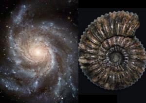 [На малюнку зображений символ пантеїзму - спіраль] «Deus sive Natura» «Бог або Природа»