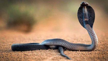 Притча Лебідка і змій