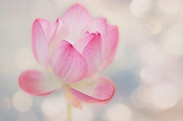 Буддхі